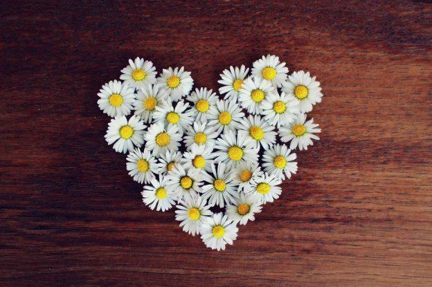 ハート型に配置したデイジーの花