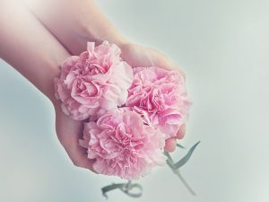 両手いっぱいのピンクのカーネーション