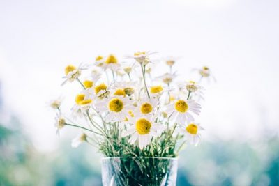 白い花びらの小さく可愛いお花の写真