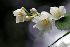 お供えに白い花