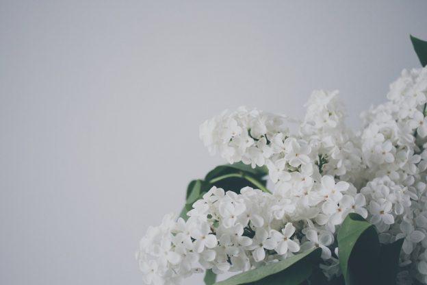 お供え花に白いライラックの花