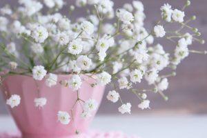 ピンクの器に入った白いかすみ草
