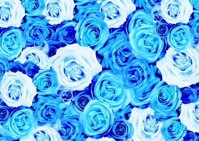たくさんの種類の青いバラ