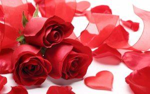 真っ赤なバラと真っ赤なハート