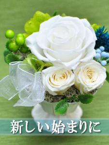 白バラ三輪を使った送別の御祝い用のプリザーブドフラワー