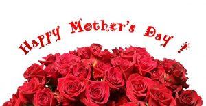 赤い花びらのバラが沢山の画像