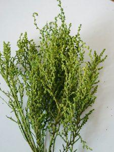淡いグリーン色の枝がたくさん付いたプリザーブドフラワーの枝物