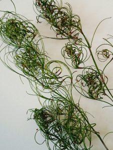 カールした葉先が個性的なプリザーブドフラワー葉物