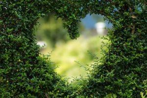 庭の植木でハートマークを作った画像