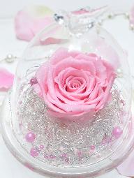 大輪のピンクバラ
