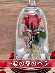 美女と野獣のようなガラスドームに入った一輪のプロポーズ用の赤バラ