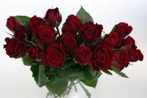 赤い花びらのバラの画像