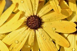 黄色いお花のアップ