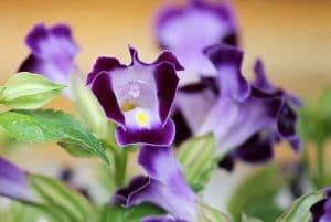 リンドウ 紫の花