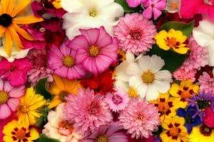 黄色・白・ピンクなど色とりどりの花が画面いっぱいに敷き詰められている