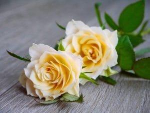 木製の床に淡い黄色のバラが二輪並んでいる