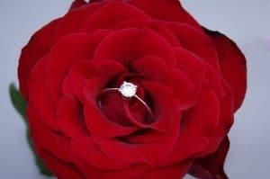 赤い大輪のバラの中心に婚約指輪が乗っている