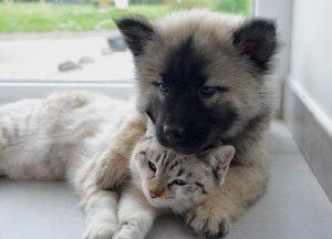子犬と子猫が仲良く寝ている画像